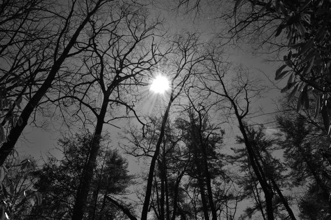 B&W_Trees