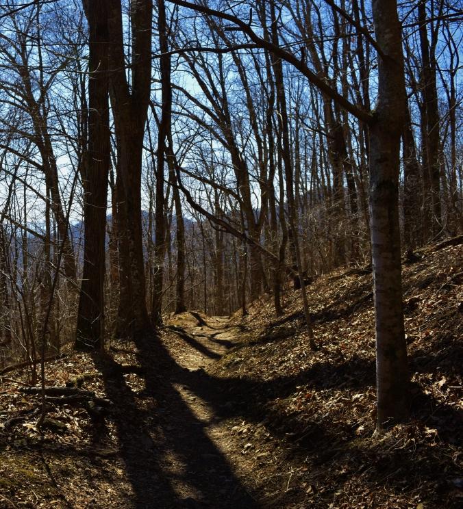 Trail_Trees