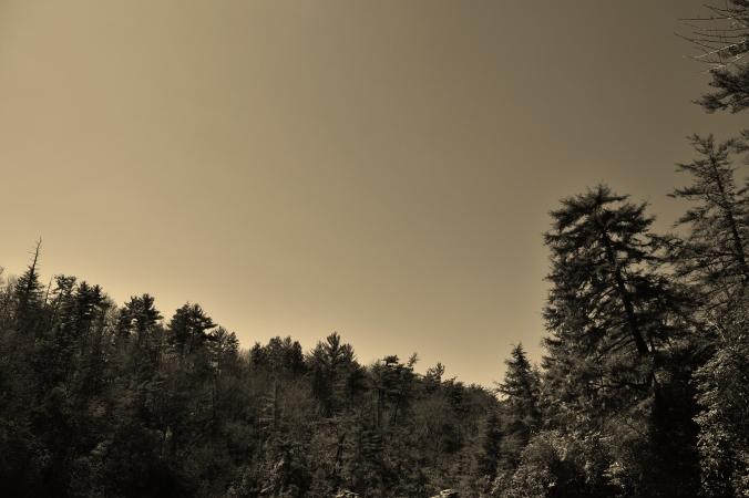 Trees_Sky